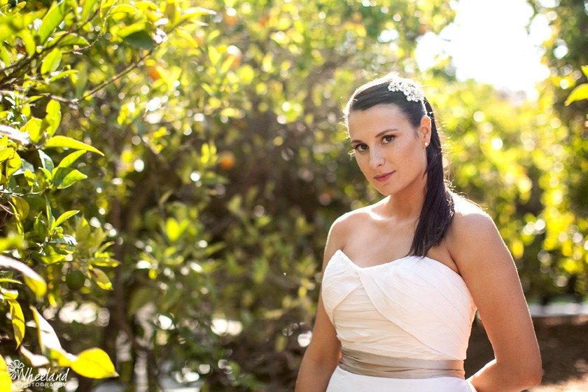 Bride in orange grove