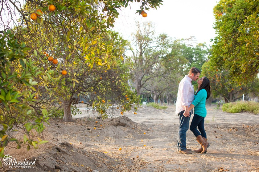 orange grove engagement photos